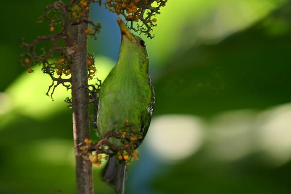 Costa Rica: Animals in the Rain Forest