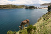 Isla del Sol with a donkey