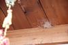 DSC_0539 Interesting Nest