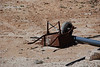 DSC_0352 On the road in Jordan - rusty wheel barrel
