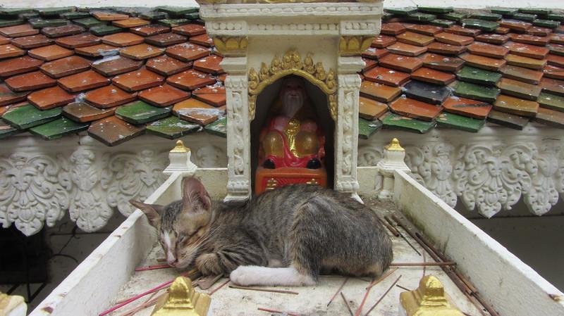 Khmer kitty cat taking a nap.
