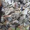 Pinecrest hike6 - Lisa-Leo