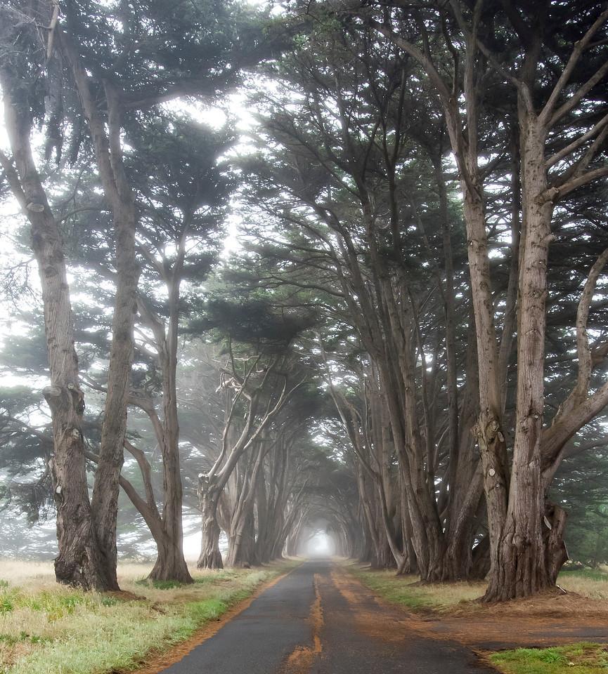 Cypress Tree Tunnel