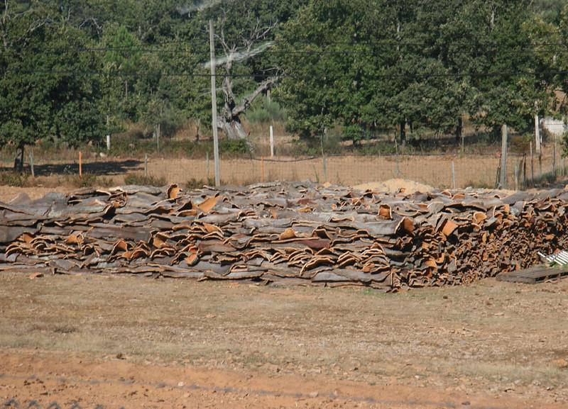 Cork bark drying