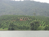 You can see the orange orchard and coffee plantation across the lake.