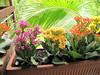 Flores en la terraza de atras