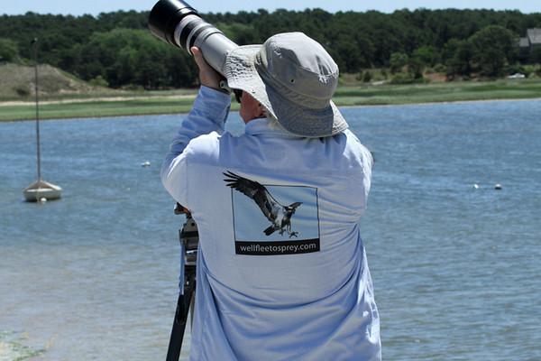 Wellfleetosprey.com