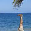 The elusive invertosaur was captured along the beach in San Juan!