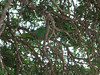 Birds at the resort. Look closely you can see a green parot.