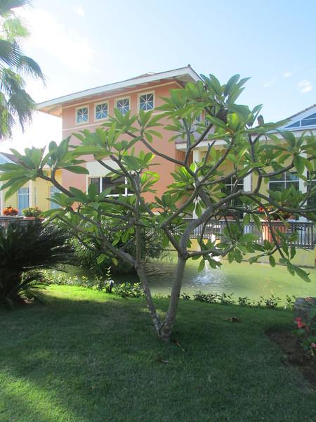 Punta Cana1_12 26 13_9305