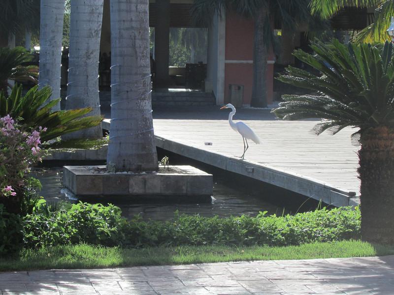 Punta Cana1_12 26 13_9307