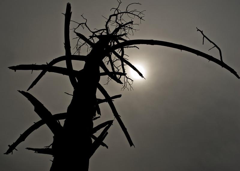 QuailIsland_2011-01-30_10-41-13_DSC_7118_©RichardLaing(2011)