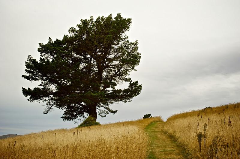 QuailIsland_2011-01-30_13-07-09_DSC_7303_©RichardLaing(2011)