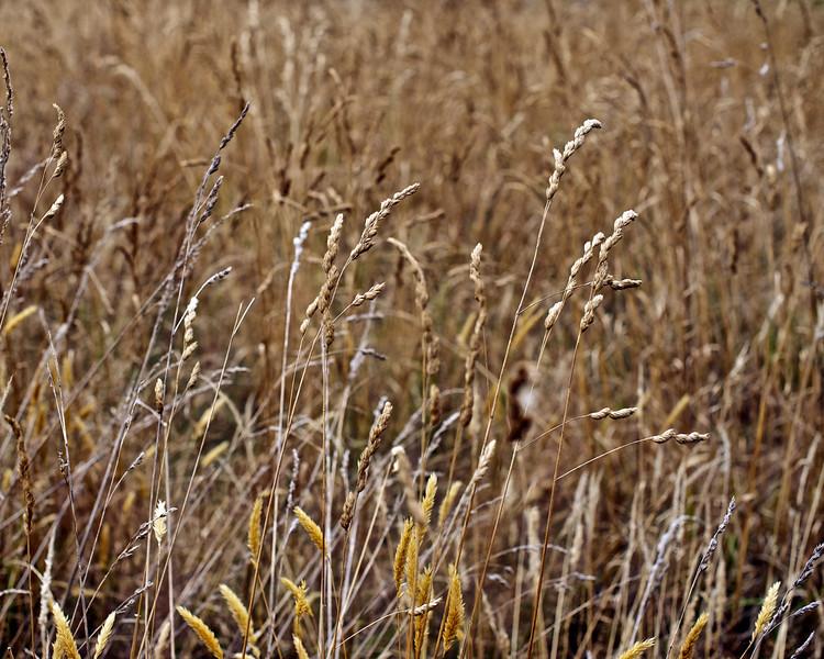 QuailIsland_2011-01-30_10-51-29_DSC_7126_©RichardLaing(2011)