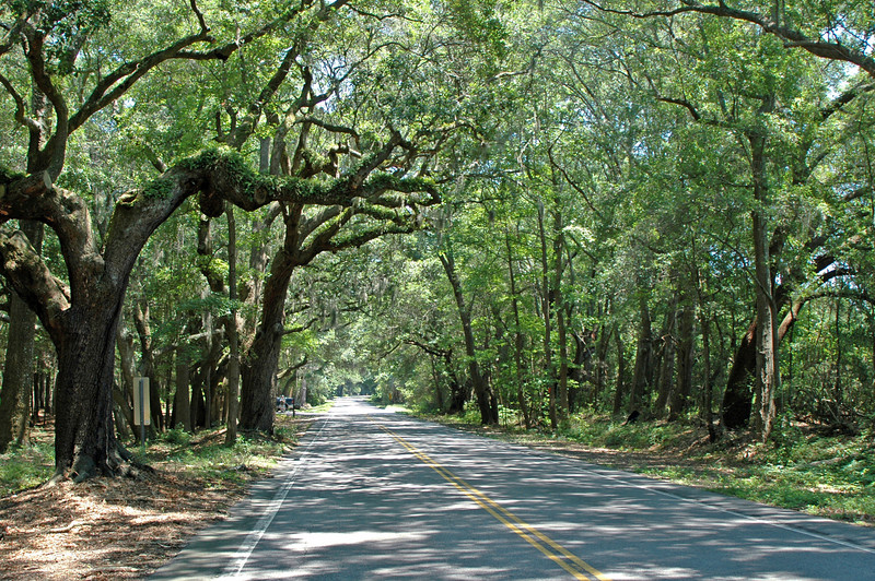 On the road to Kiawah Island from Charleston. It is only a 30 minute drive.