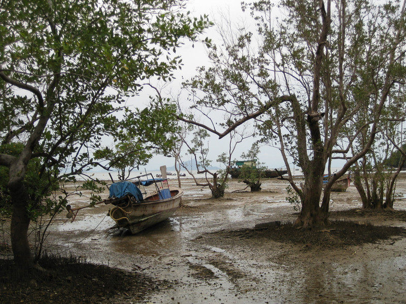 Low tide with the mangrove trees