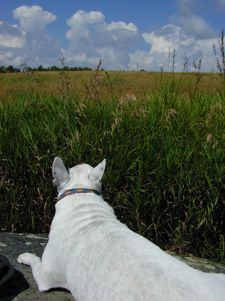 Mary Alice watches the summer convection from Whammy's Hill Rock
