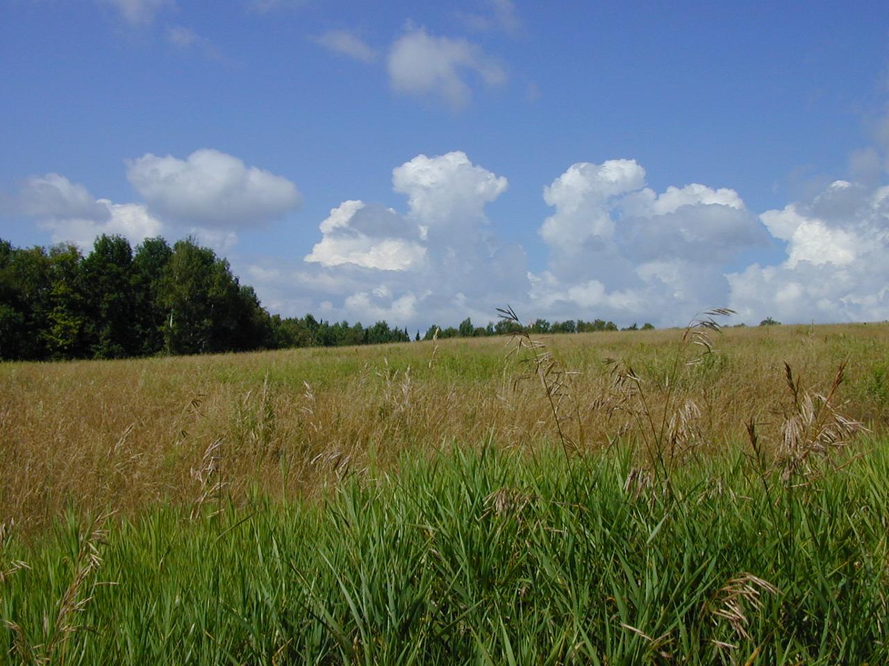 Whammy's Hill, Rangeley ME (ca. 2000)