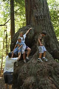 2008-08-12_Redwoods_047