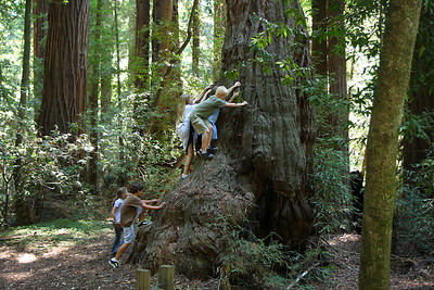 2008-08-12_Redwoods_044