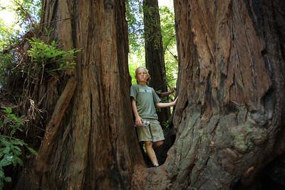 2008-08-12_Redwoods_035