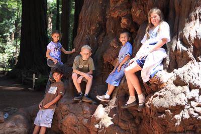 2008-08-12_Redwoods_020