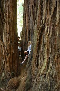 2008-08-12_Redwoods_026