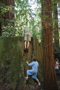 2008-08-12_Redwoods_039