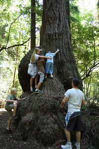 2008-08-12_Redwoods_045