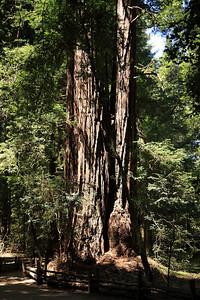2008-08-12_Redwoods_022