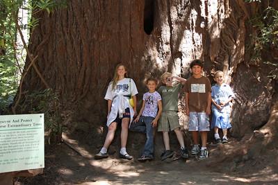 2008-08-12_Redwoods_030