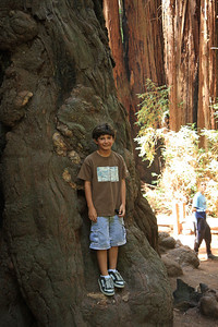 2008-08-12_Redwoods_018