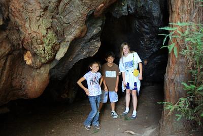 2008-08-12_Redwoods_034