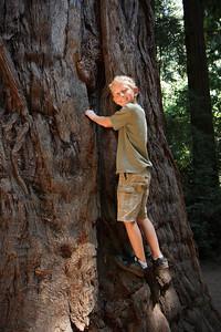 2008-08-12_Redwoods_043