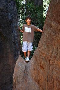 2008-08-12_Redwoods_042