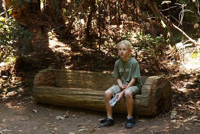 2008-08-12_Redwoods_052