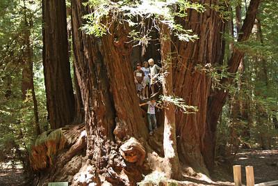 2008-08-12_Redwoods_024