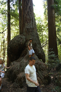 2008-08-12_Redwoods_048