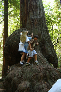2008-08-12_Redwoods_046