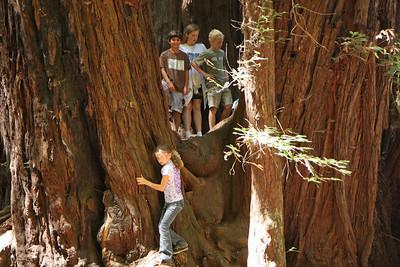 2008-08-12_Redwoods_025