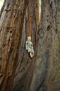 2008-08-12_Redwoods_027