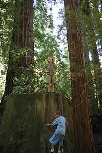 2008-08-12_Redwoods_040