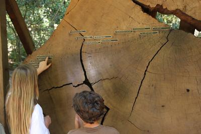 2008-08-12_Redwoods_033