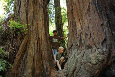 2008-08-12_Redwoods_036
