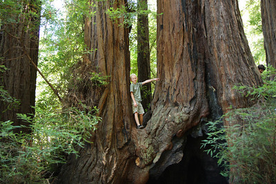 2008-08-12_Redwoods_038