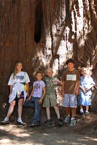 2008-08-12_Redwoods_029