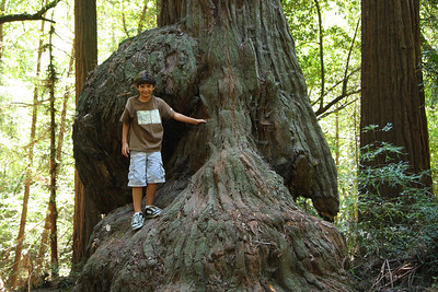 2008-08-12_Redwoods_049