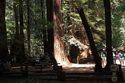 2008-08-12_Redwoods_012