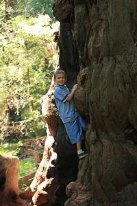 2008-08-12_Redwoods_017