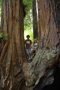 2008-08-12_Redwoods_037